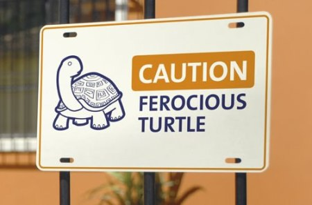caution-ferocious-turtle