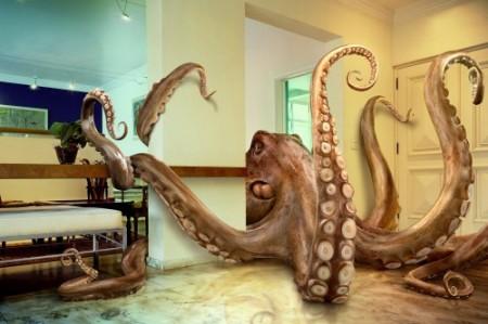 octopus-500x333