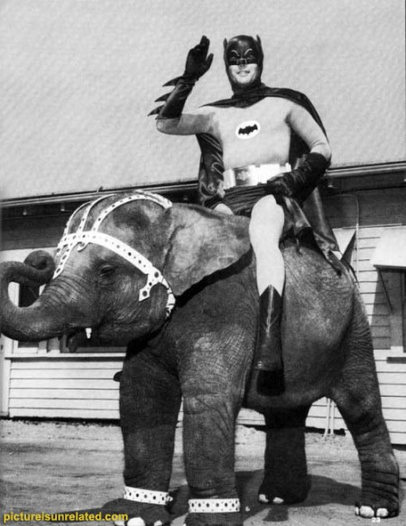 wtf_pictures-bat-e-phant